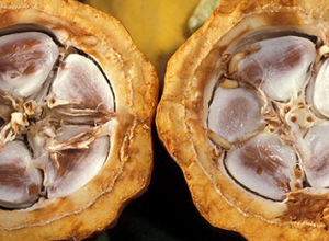 SPA-процедура «Маска для тела с плодами какао»